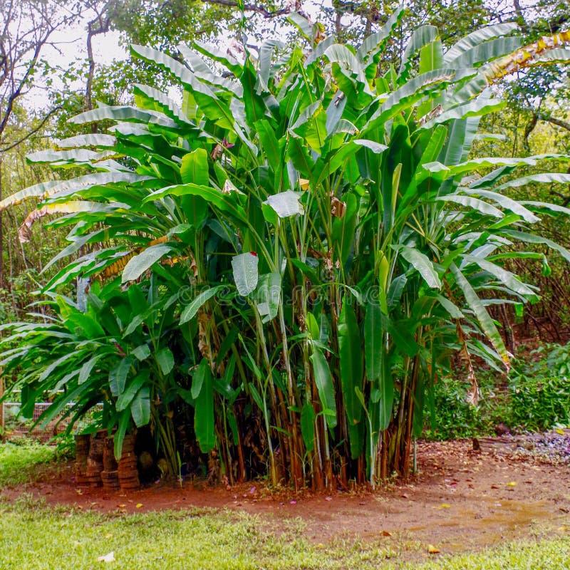 Princeville ogródy botaniczni, Kauai, Hawaje, usa obraz stock