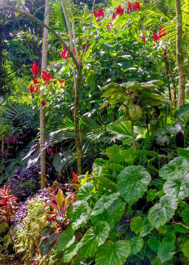 Princeville ogródy botaniczni, Kauai, Hawaje, usa fotografia stock