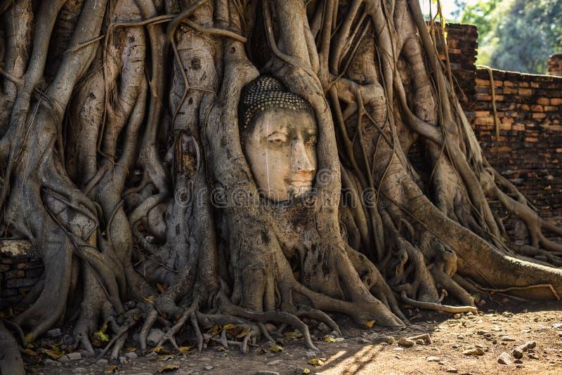 Principal de Buda demasiado grande para su edad por el árbol arraiga en Wat Mahathat, Ayutthaya, Tailandia imagen de archivo libre de regalías