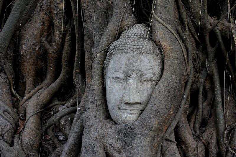 Principal de Buda demasiado grande para su edad por la higuera en el parque histórico de Wat Mahathat Ayutthaya fotos de archivo