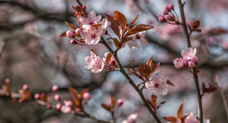 Principio de la primavera con el cielo azul fotografía de archivo