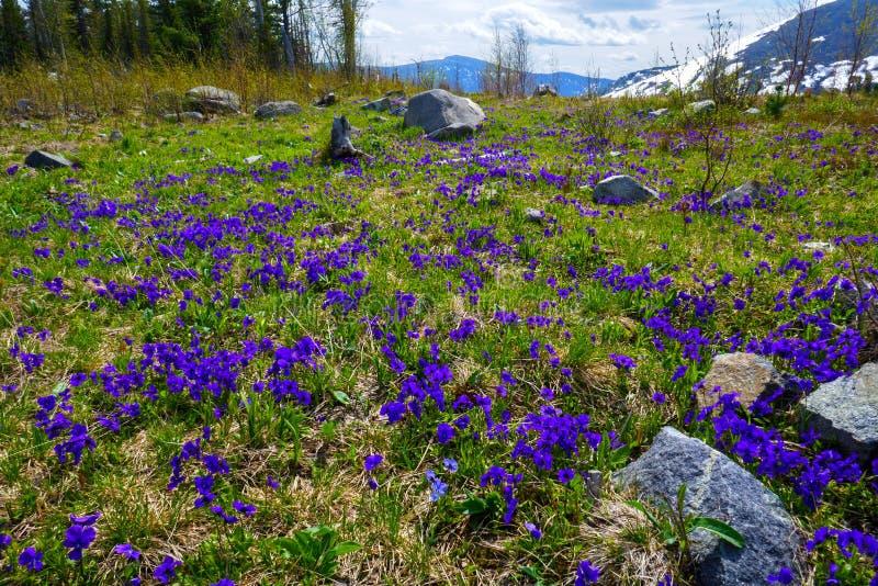 A principios de junio en las cuestas de montaña fotografía de archivo