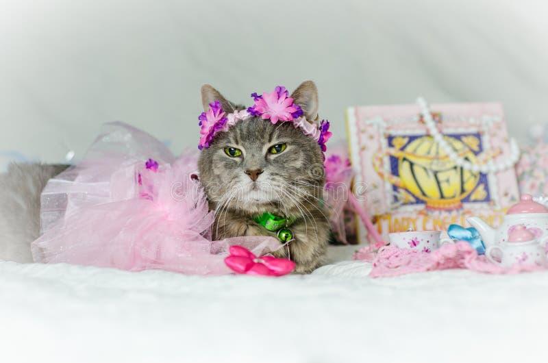 Prinsessa Cat i en ballerinakjol för en tebjudning arkivbild