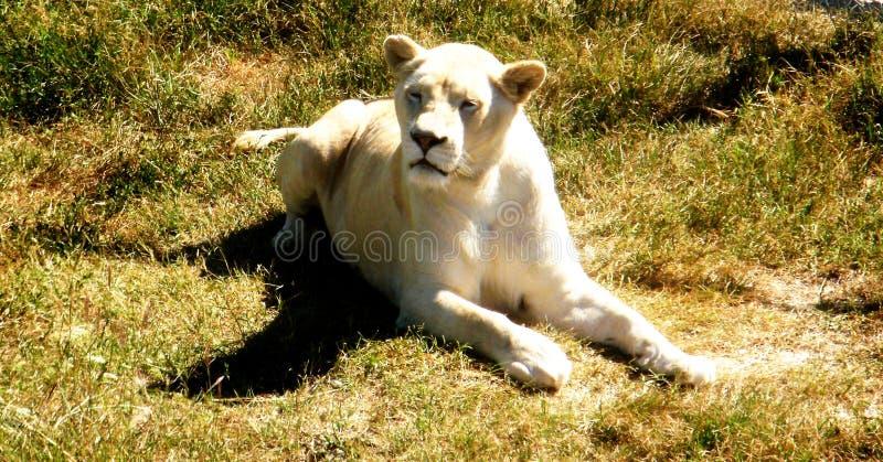 Prinsessan av djur royaltyfri fotografi