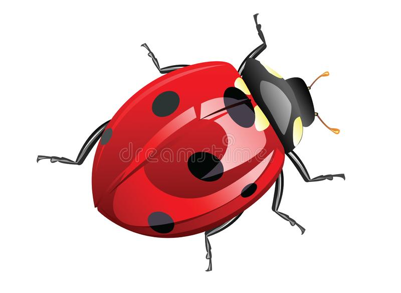 Ladybug cartoon posing. Design illustration royalty free illustration