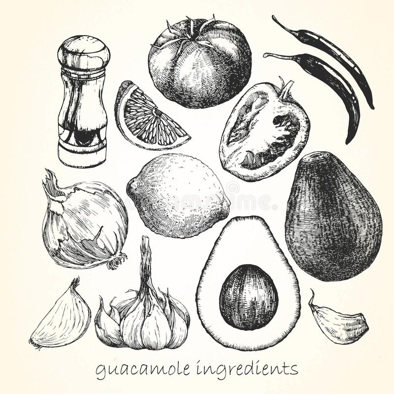 Set of ingredients for Guacamole. Hand-drawn illustration. Vector vector illustration