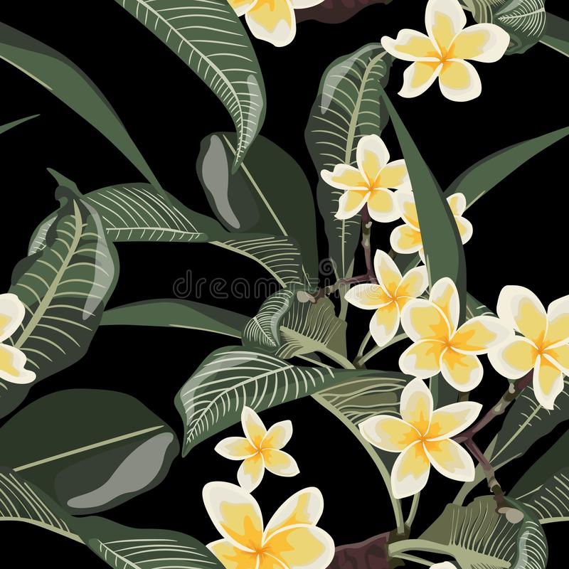 Plumeria tropical exotic flower seamless pattern. Realistic floral illustration. Elements for spa design. Black background royalty free illustration