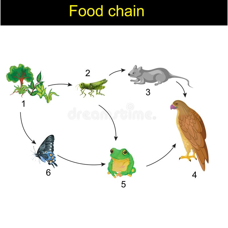 Biology - Food chain version 01. Animal, animals, art, background, biology, bird, butterfly, carnivore, chain, circle, concept, cycle, design, drawing, eat stock illustration