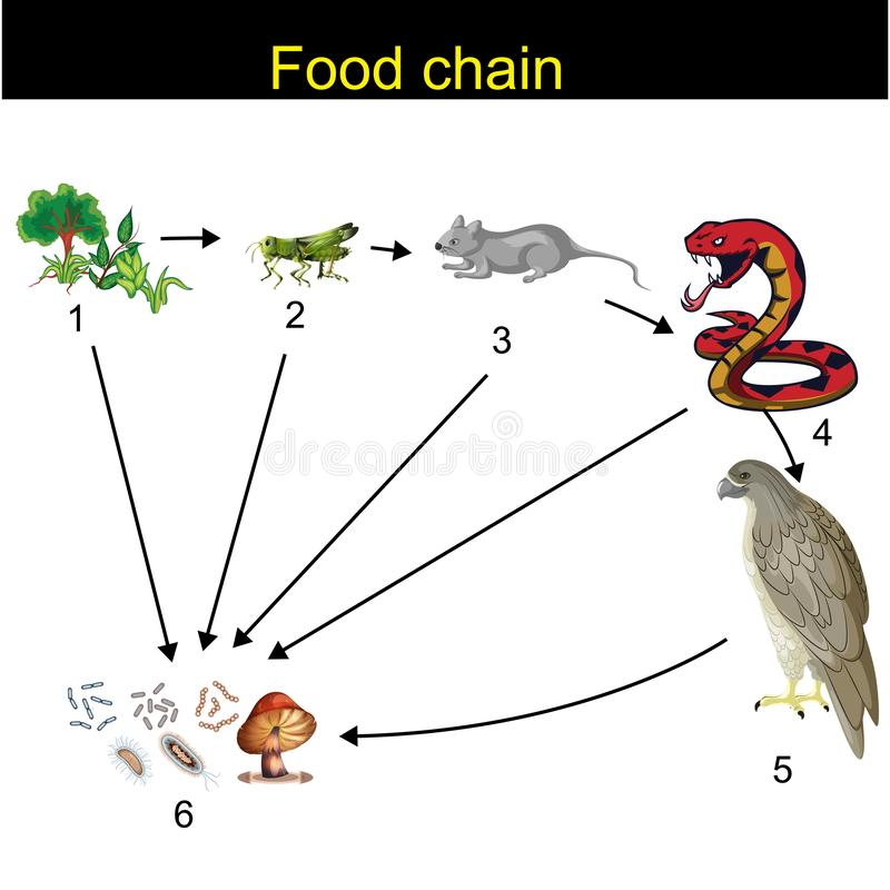 Biology - Food chain Revision. Animal, animals, art, background, biology, bird, butterfly, carnivore, chain, circle, concept, cycle, design, drawing, eat royalty free illustration