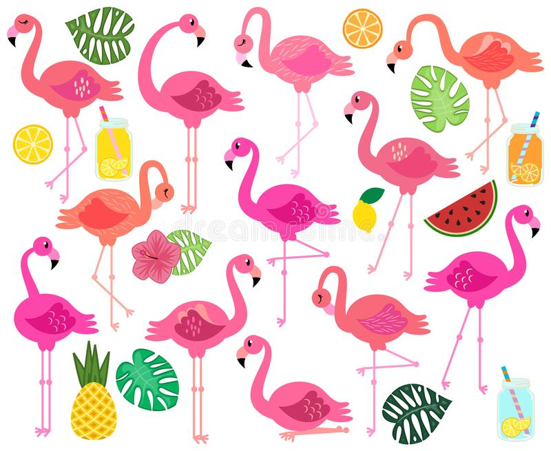 Vector Collection of Flamingos, Tropical Leaves, Fruit and Summery Drinks vector illustration