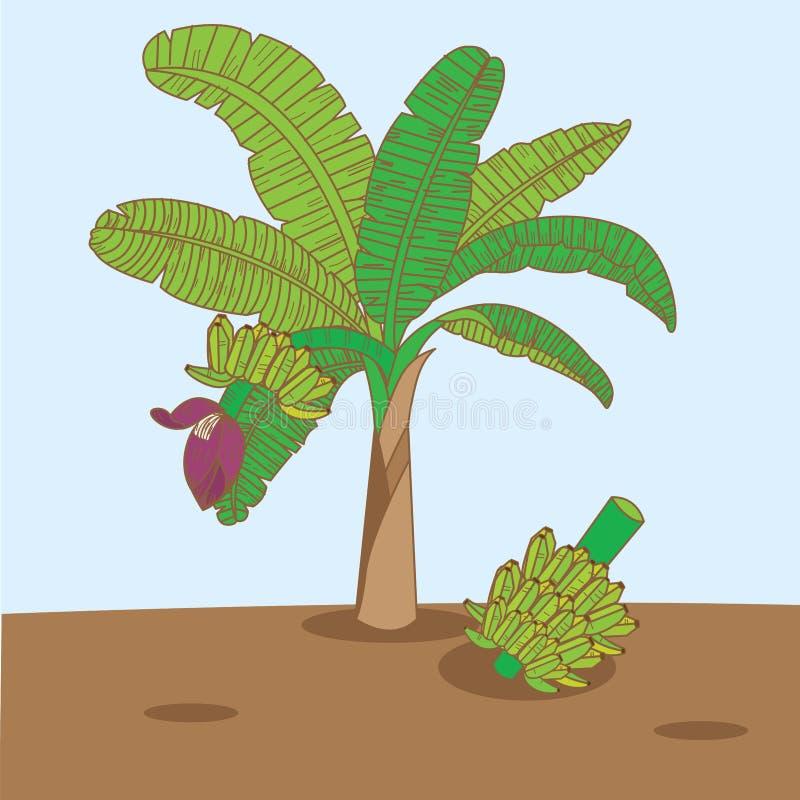 Banana tree vector and background royalty free stock photography