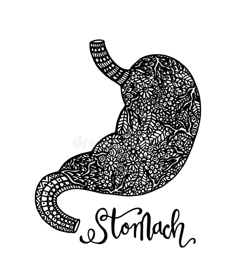 Human stomach in doodle style with ornament illustration. Black and white Human stomach in doodle style with ornament illustration stock illustration