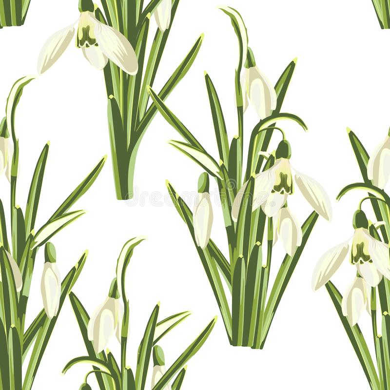 Seamless pattern with bouquet of  white snowdrop flowers on a white background. royalty free illustration