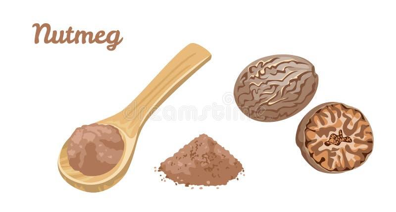 Nutmeg. Vector illustration of culinary seasoning. Nutmeg isolated on a white background. Spice powder in a wooden spoon. Vector illustration of culinary royalty free illustration