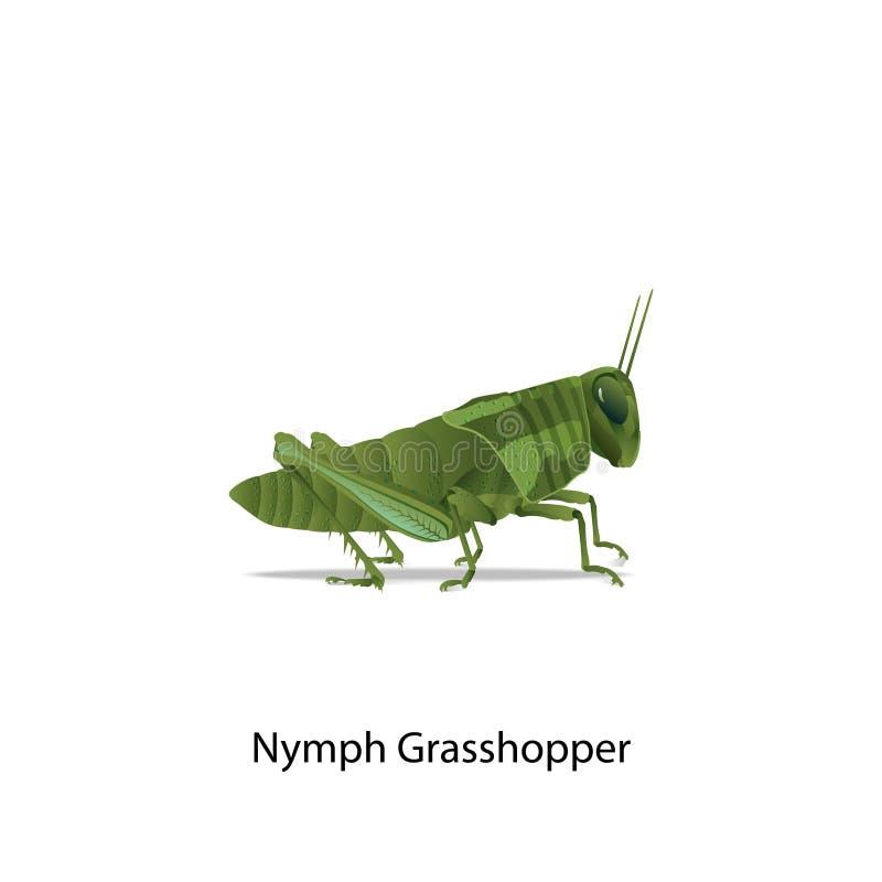 Nymph grasshopper vector on white background. For all graphic designer,education,science. eps10 vector vector illustration