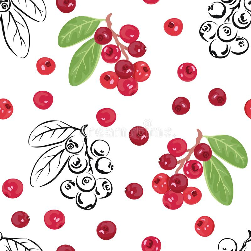 Vector cranberries. Seamless pattern with red berries and black-white outline on white background. stock illustration