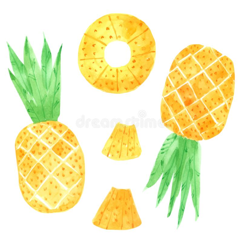 Pineapple watercolor collection on white background Hand drawn painting vector illustration