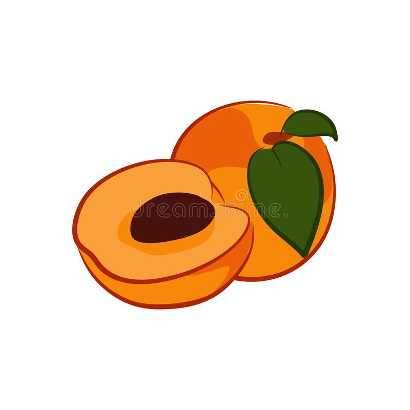 A Dried Apricots. Tasty and delicious edible apricots vector illustration