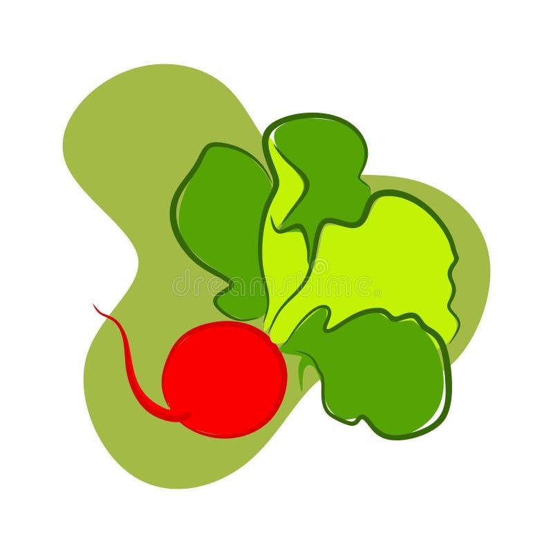 Royal Red Radish. Radish is healthy and good to eat as a salad royalty free illustration