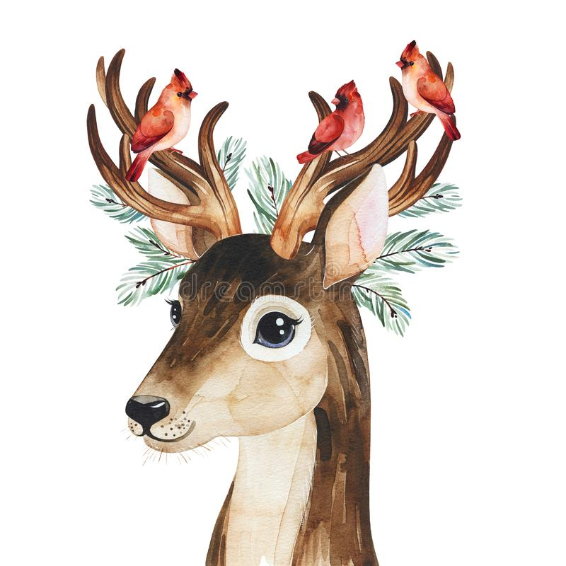 Winter composition with conifer branches,cardinal birds and cute deer. royalty free stock images