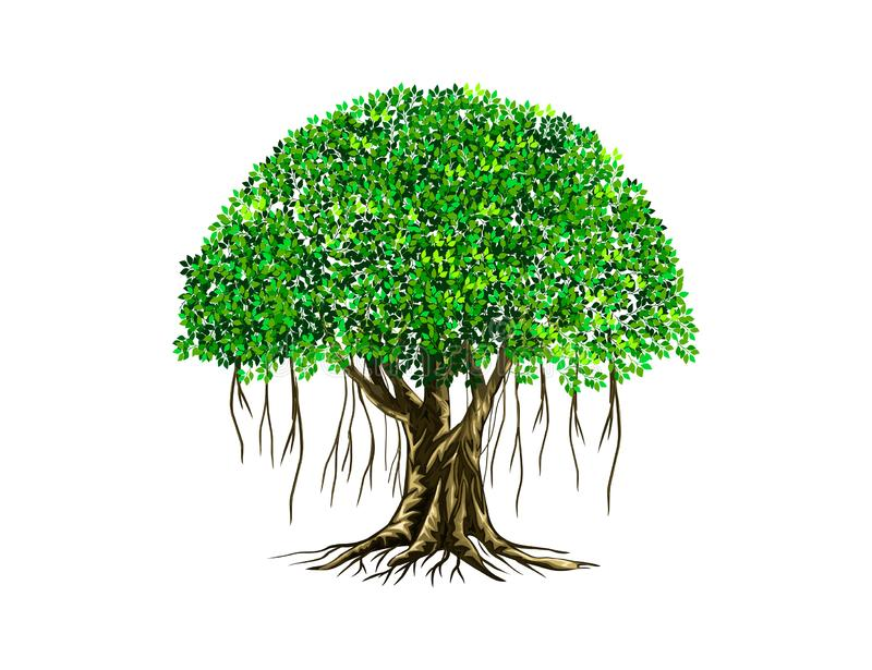 Banyan tree vector illustration with roots royalty free illustration