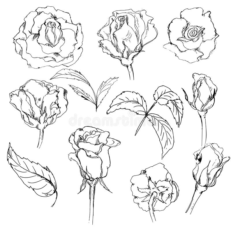 Alice In Wonderland Sketched Icons Isolated On White Background Stock Illustration Illustration Of Collection Monochrome 181732130