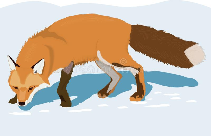Transparent Fox Stock Illustrations 307 Transparent Fox Stock Illustrations Vectors Clipart Dreamstime