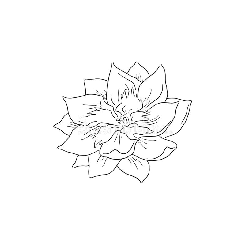 Black Line Art Delphinium Flower Vector Line stock illustration