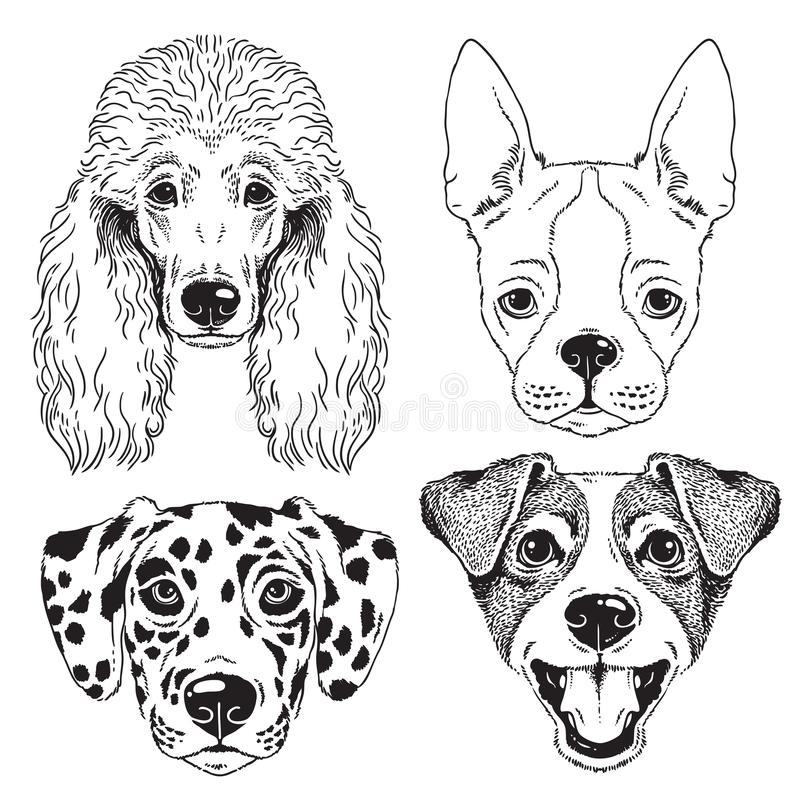 A set of 4 line drawings of dogs faces. A set of 4 dog's faces - Poodle, Boston Terrier, Dalmatian and Fox Terrier/Jack Russel. Black and white vector vector illustration