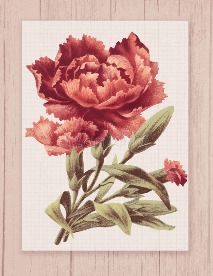 Printable vintage shabby chic style flower on wood textured background frame stock illustration