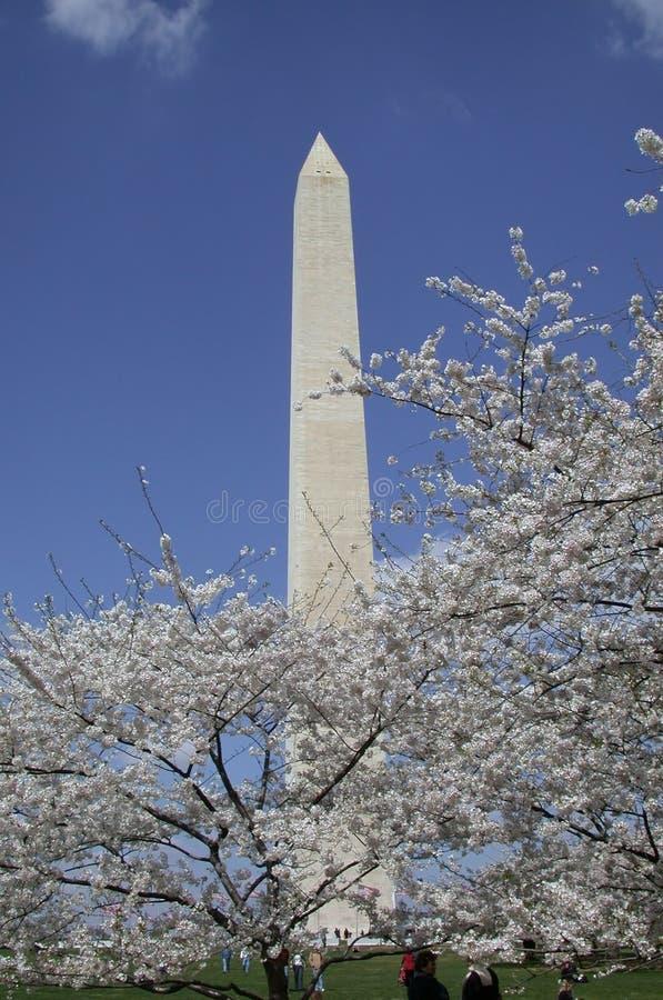Printemps à Washington, C.C images libres de droits