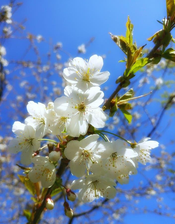 printemps photographie stock