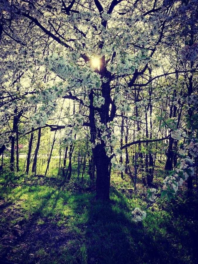 printemps photo libre de droits
