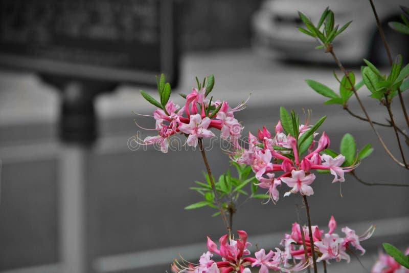 printemps images libres de droits