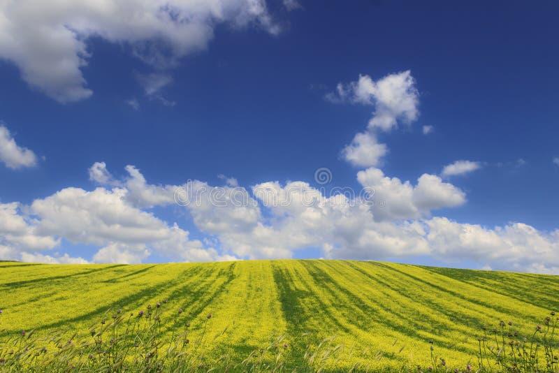 Printemps : campagne avec la colline verte et les fleurs jaunes images stock