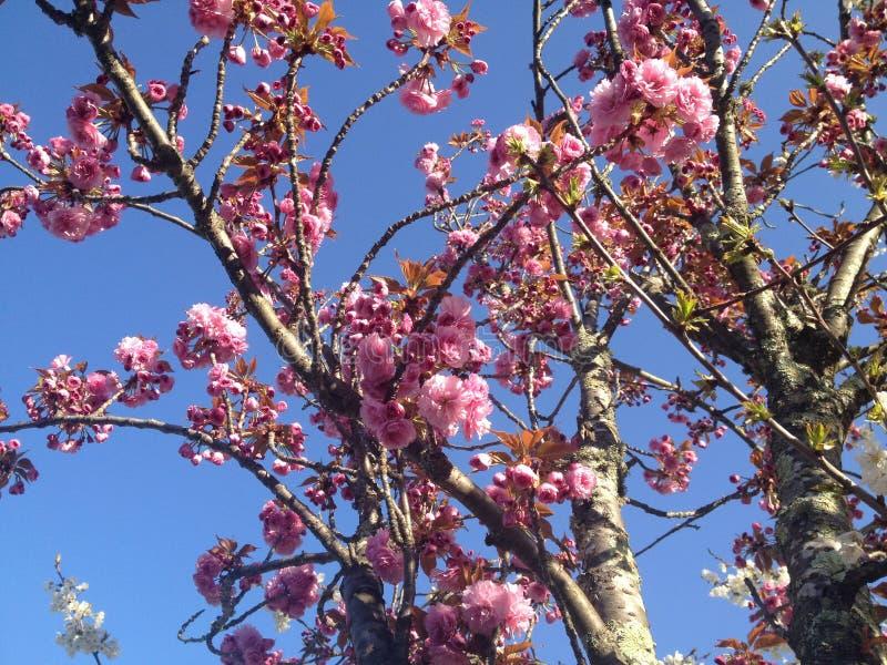 Printemps de fleur de fleurs en avril images stock
