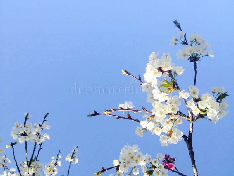 Printemps de fleur de fleurs en avril photos stock