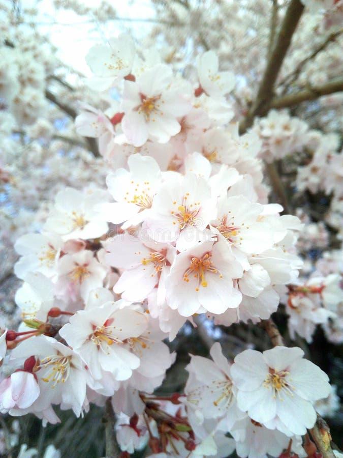 Printemps de floraison de fleur images libres de droits