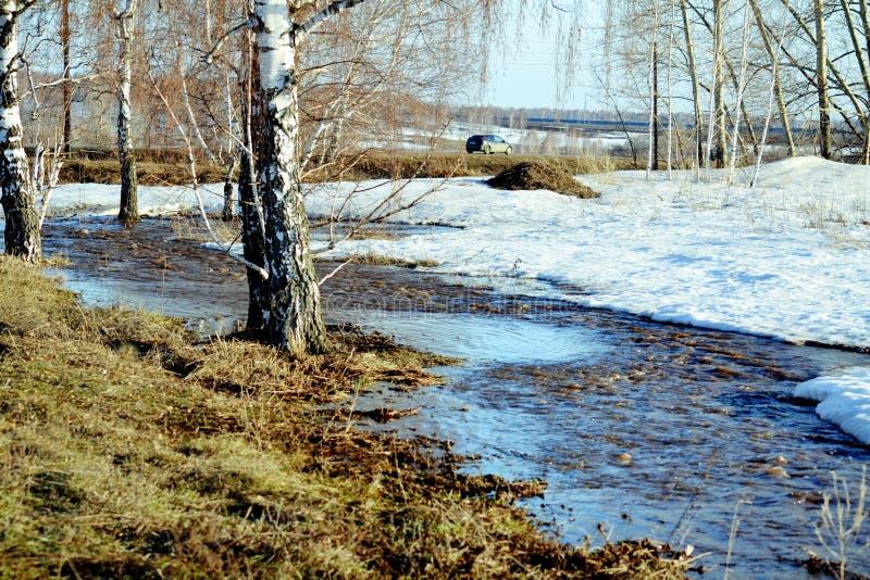Printemps en steppe photos libres de droits