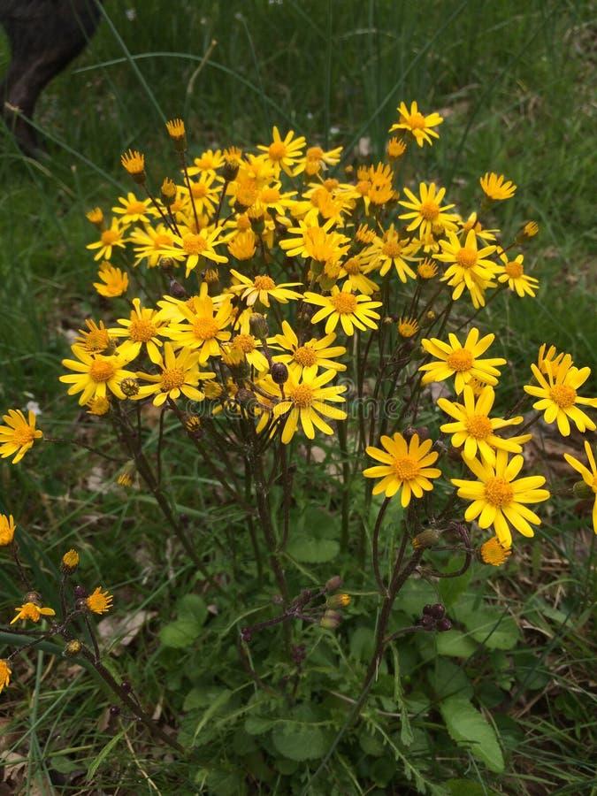 Printemps jaune de fleur images stock