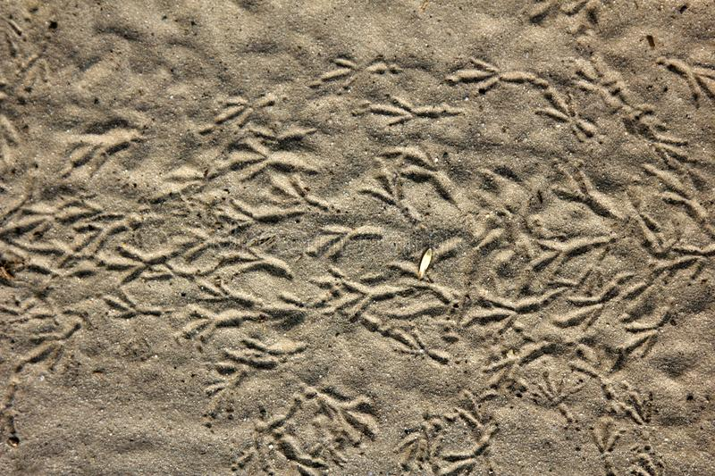 prints of birds feet on sand, bird trail stock photo