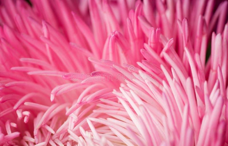 Priorità bassa astratta del fiore Fotographia a macroistruzione fotografia stock libera da diritti
