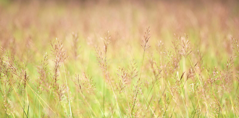 Priorità bassa astratta della natura di estate o della sorgente fotografie stock libere da diritti