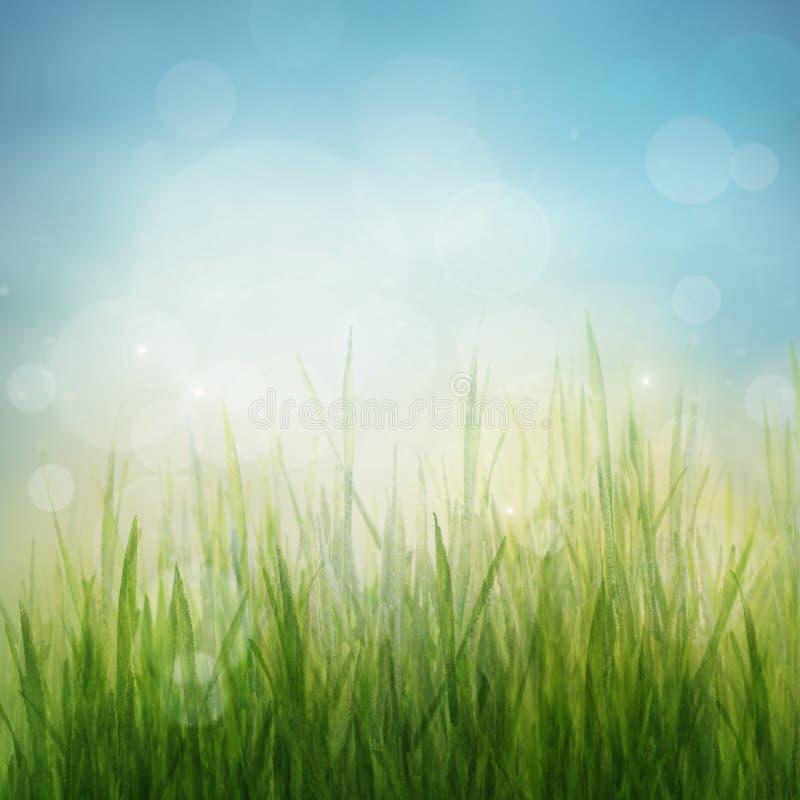 Priorità bassa astratta della natura di stagione di estate o della sorgente fotografie stock libere da diritti