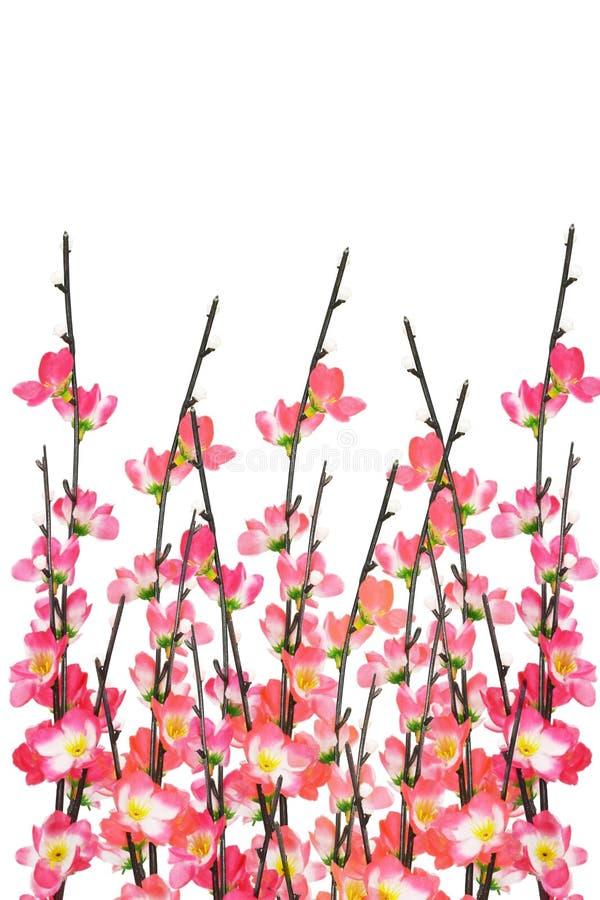 Priorità bassa cinese dei fiori di ciliegia di nuovo anno fotografia stock libera da diritti