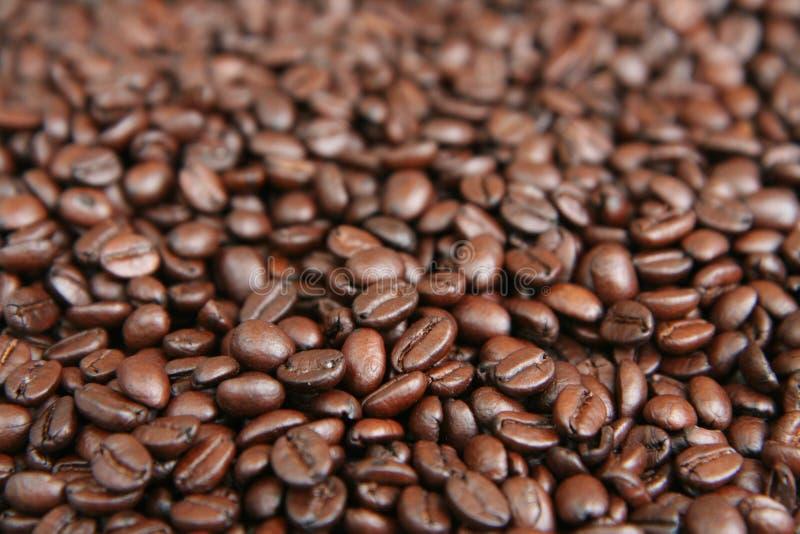 Priorità bassa dei chicchi di caffè immagini stock libere da diritti
