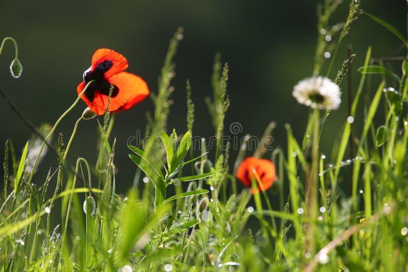 Priorità bassa dei fiori selvaggi fotografia stock