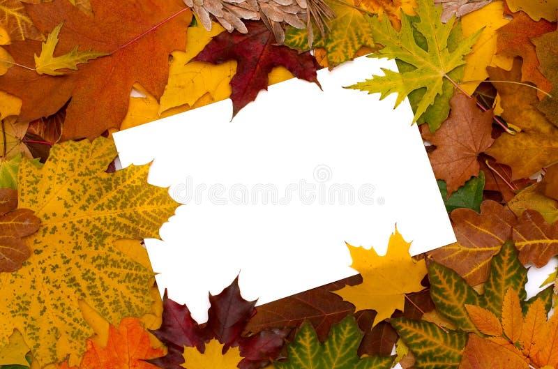 Priorità bassa dei fogli di autunno fotografia stock libera da diritti