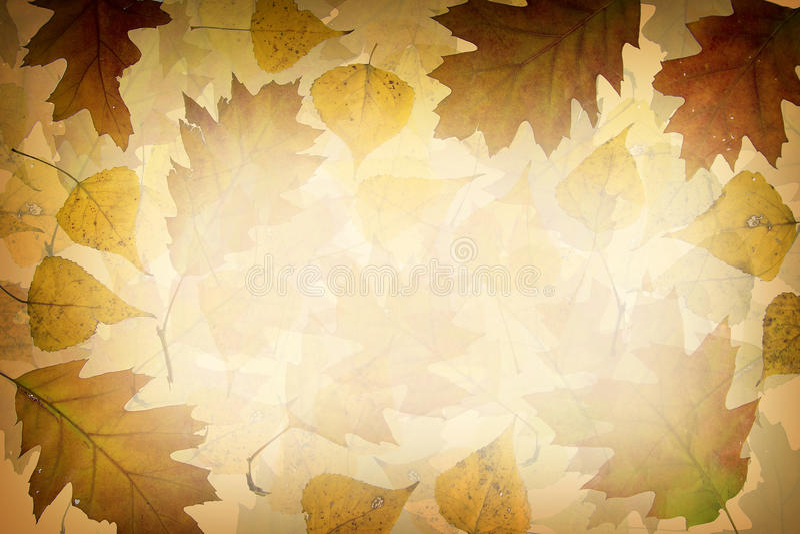 Priorità bassa dei fogli di autunno illustrazione vettoriale