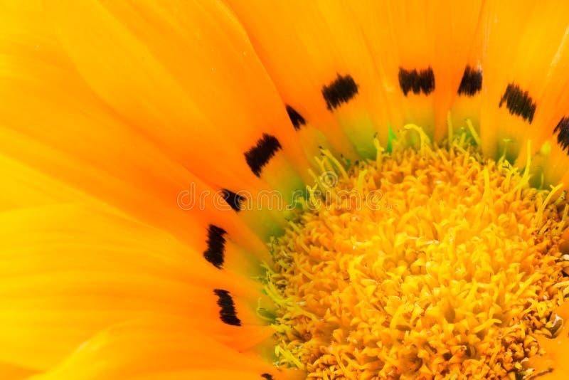 Priorità bassa dei petali del fiore fotografia stock libera da diritti